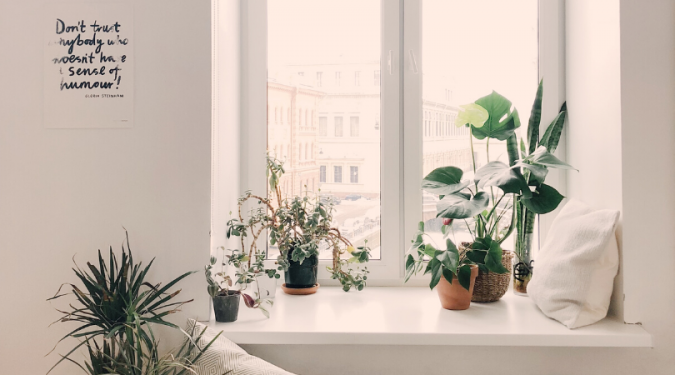A window with plants